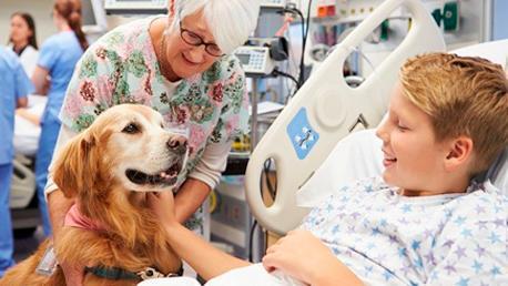 Curso Monitor en Terapia Asistida con Perros y Caballos