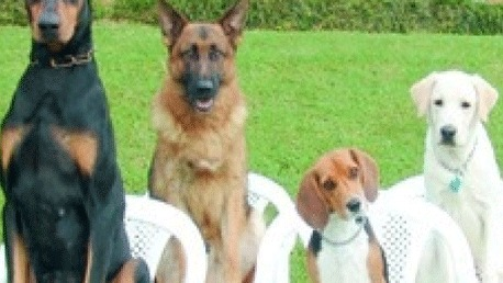 Curso Psicología, Educación y Adiestramiento Canino