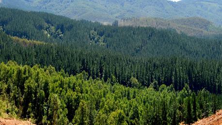 Oposiciones Agente Forestal para la Comunidad de Madrid