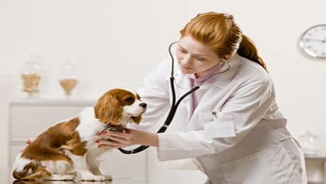Curso Enseñanza Técnico Profesional de Auxiliar de Clínica Veterinaria