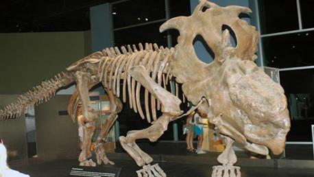 Curso Perito en Paleontología (Curso Universitario de Especialización)