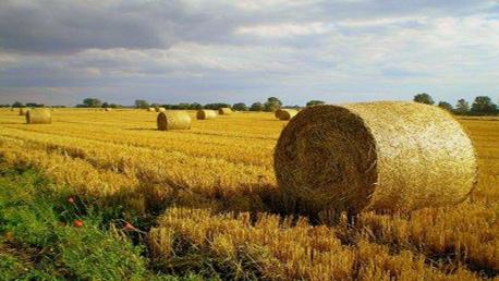 Curso Perito Tasador Seguros Agrarios (Curso Universitario de Especialización)