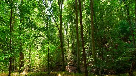 Master Gestión y Conservación de Espacios Naturales Protegidos