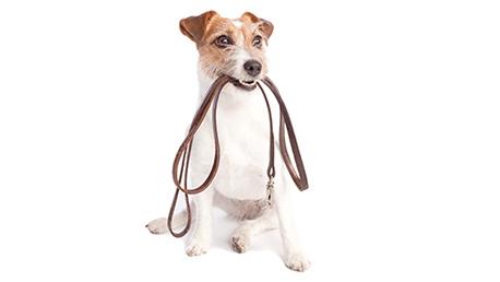 Curso Educacion y Adiestramiento Canino con Practicas