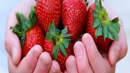 Curso Integración de Sistemas de Gestión Alimentaria y Otros Estándares