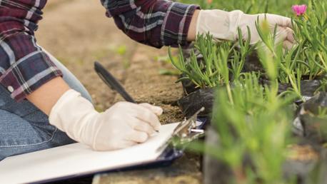Curso Complementos de Formación de Adaptación a Grado en Ingeniería Agropecuaria y del Medio Rural