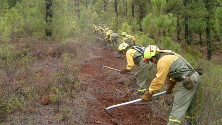 Grado Ingeniería Forestal