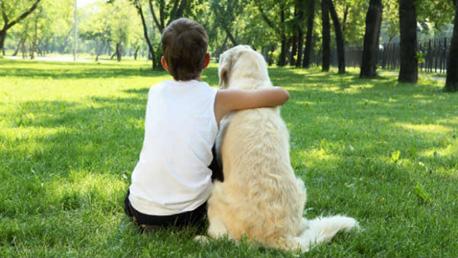 Curso Técnico en Intervención Asistida con Animales