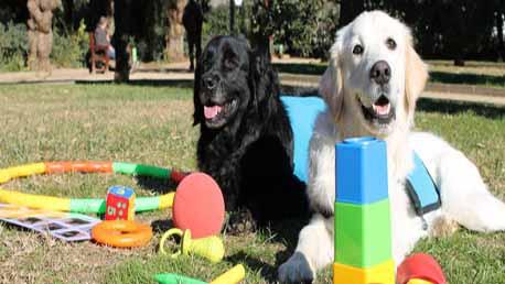 Master Terapia Asistida con Animales