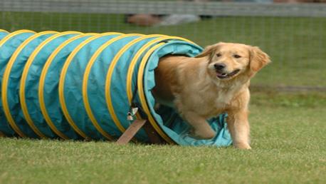 Curso Educador Canino