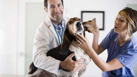 Curso Auxiliar Técnico Veterinario