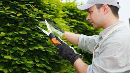 Curso t cnicas de jardiner a distancia delena formaci n for Estudiar jardineria