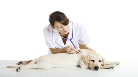 Curso Ayudante Técnico Veterinario con Prácticas