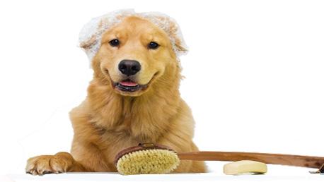 Curso Técnico en Peluquería y Estética Canina