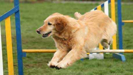 Curso Técnico en Educación y Adiestramiento Canino