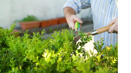 Curso online de Jardinería