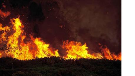 Curso online de Extinción de Incendios Forestales