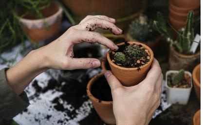 Curso online de Jardinería de Interior
