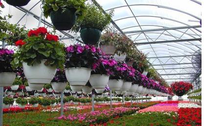 Curso online Profesional de Horticultura y Floricultura Módulo 2