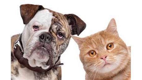 Curso Etología Canina y Felina