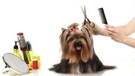 Curso Intensivo a la Peluquería Canina y Felina