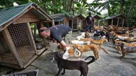 Curso Director de Protectora de Animales - DPA
