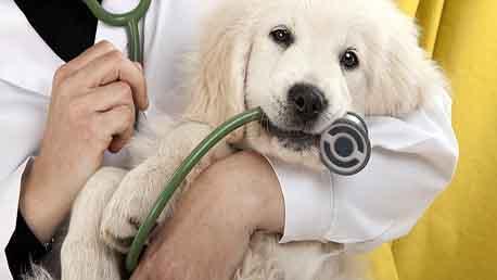 Curso Técnico Superior en Cuidados de Enfermería Veterinaria