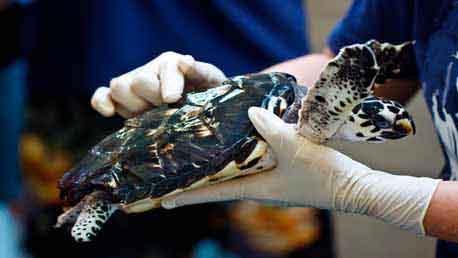Curso Especialista en Cetáceos y otros Animales Marinos