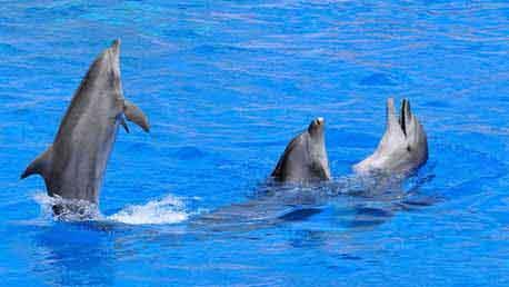 Curso Online Especialista en Cetáceos y Otros Animales Marinos