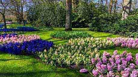 Curso Especialista en Jardinería. Diseño, Creación y Mantenimiento de Jardines