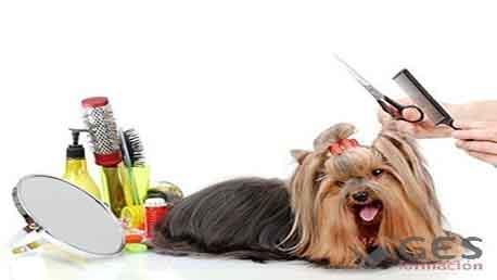 Curso Especialista en Peluquería Canina