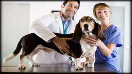 Curso Auxiliar de Veterinaria