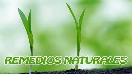 Curso Remedios Naturales
