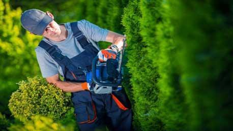 Curso Técnico en Jardinería