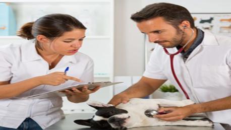 Curso Dirección y Gestión de Clínicas Veterinarias