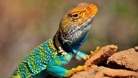 Curso Especialista en Animales Exóticos