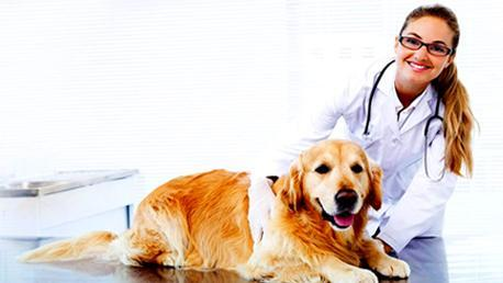 Master Cuidados Auxiliares y Estética Veterinaria