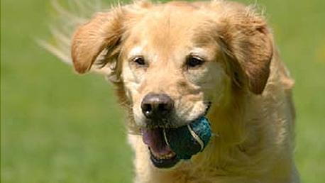 Curso Adiestramiento de Base y Educación Canina