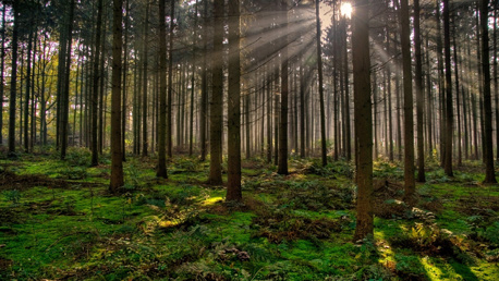 Curso Enseñanza Técnico Profesional de Trabajador Forestal