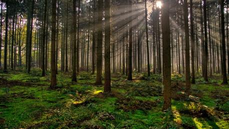 Curso FP Técnico Superior en Gestión Forestal y del Medio Natural