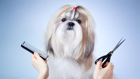Curso Peluquería y Estética Canina con Prácticas