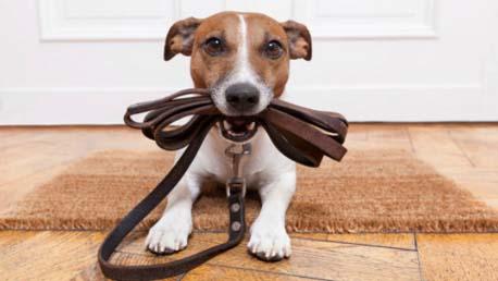 Curso Educador Canino con Practicas