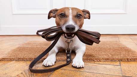 Curso Educación y Adiestramiento Canino