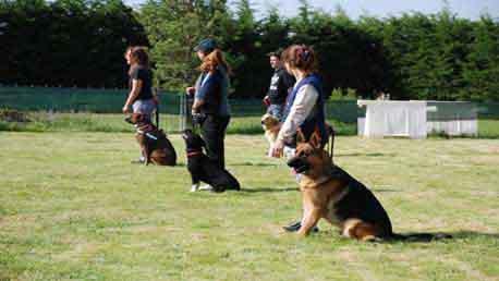 Curso Online de Adiestrador Canino: Obediencia Básica