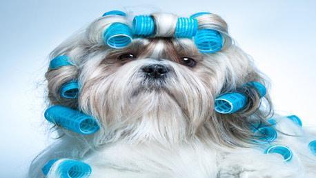 Curso Online de Peluquería y Estética Canina